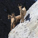Entdecken Sie die Wildtiere in der Nähe des Campingplatzes Guillestre in den Hautes-Alpes.