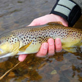 Enjoy fishing in the Hautes-Alpes rivers with its Fario trouts, which not only beautiful fish bust very tasty as well.